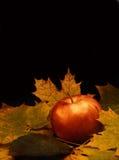 Roter Apfel und Ahornblätter Stockfoto