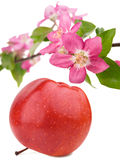 Roter Apfel und Blumen Stockbild