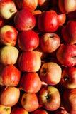 Roter Apfelhintergrund am Abteilungsspeicher Stockbilder