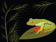 Roter Augenbaumfrosch stock abbildung