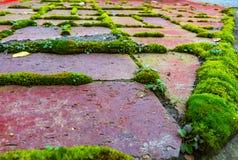 Roter Backstein mit grünem Moos Lizenzfreie Stockfotografie