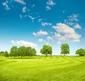 Roter Ball auf T-Stück, flacher DOF Frühlingsfeld mit grünem Gras und blauem Himmel stockfoto