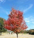 Roter Baum Lizenzfreie Stockfotografie