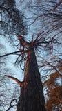 Roter Baum Lizenzfreies Stockbild