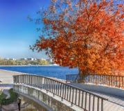 Roter Baum Lizenzfreie Stockbilder