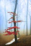 Roter Baum im Wald Stockfotos