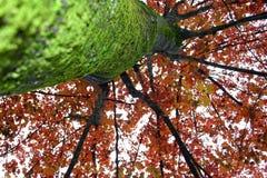 Roter Baum mit grünem Moos Lizenzfreie Stockfotografie