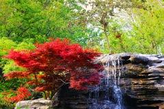 Roter Baum und Felsen gewaschen durch Wasserfall Stockfoto