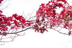 Roter Baumast lizenzfreie stockbilder
