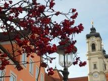 Roter Beeren-Baum Stockfoto