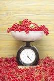 Roter Beeren Viburnum auf den Skalen stockfotografie