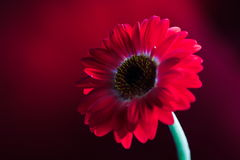 Roter Blumen-Aufbau 2. Stockfotos