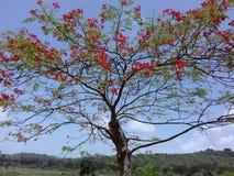 Roter Blumenbaum Stockfotos