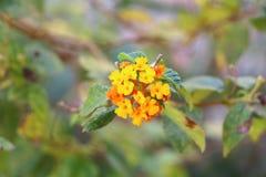 Roter Blumenhintergrund Stockfotografie