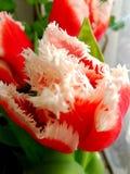 Roter Blumenhintergrund Stockbilder