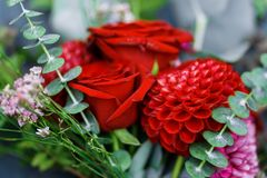 Roter Blumenstrauß mit Garten-Rosen, Eukalyptus und Dahlien Lizenzfreies Stockbild