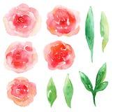 Roter Blumenvektor Stockfotos