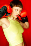 Roter Boxer stockbild