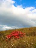 Roter Busch und Blumen auf dem Gebiet Stockbild