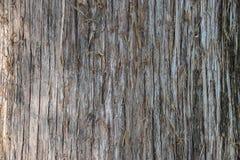 Roter Cedar Tree Trunk Background Lizenzfreie Stockfotografie
