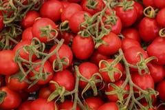 Roter Cherry Tomatoes On Green Vine Lizenzfreie Stockfotos