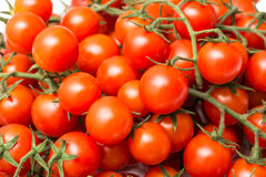 Roter Cherry Tomatoes On Green Vine Stockfotos