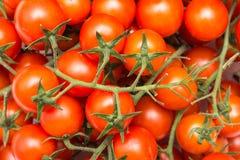 Roter Cherry Tomatoes On Green Vine Stockfotografie