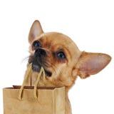 Roter Chihuahuahund mit bereiten die Papiertüte auf, die auf weißem backg lokalisiert wird Lizenzfreie Stockbilder