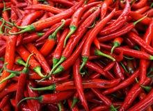 Roter Chili Pepper Stockbilder