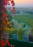 Roter Efeu auf einem Schloss Stockfotos