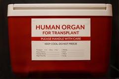 Roter Eiskasten mit dem Aufkleber, der menschliches Organ für Transplantation angibt lizenzfreies stockbild