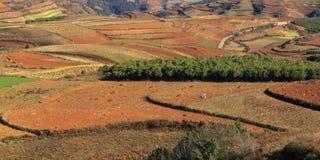 Roter Erdbereich in Yunnan Stockbilder