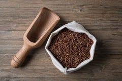 Roter ERMES-Reis mit Bürgen Lizenzfreie Stockfotografie