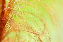 Roter Federvogel mit Tropfen auf einem weichen grünen Hintergrund Abstraktion von Makro, selektiver Fokus Stockbild