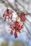 Roter Frühling Lizenzfreie Stockbilder
