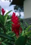 Roter Garten Stockbild