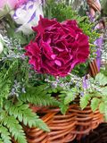 Roter Gartennelkenblumenkorb Stockfoto