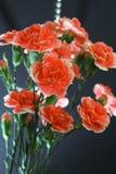 Roter Gartennelkenblumenstrauß Stockbilder