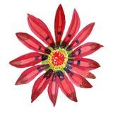 Roter Gazania Botanische mit Blumenblume Wilder Federblatt Wildflower lokalisiert Lizenzfreie Stockbilder