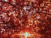 Roter gefallener Hintergrund der Blätter des Herbstparks sonniger Tages stockbild