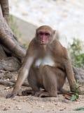 Roter gegenübergestellter Affe im thailändischen Tempel Lizenzfreie Stockfotografie
