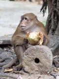 Roter gegenübergestellter Affe im thailändischen Tempel Stockfotografie