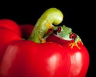 Roter gemusterter Frosch auf rotem Pfeffer Lizenzfreie Stockbilder