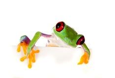 Roter gemusterter lugender Frosch Stockfotos