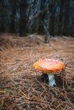 Roter Giftpilzpilz in einem dunklen Wald stockfoto