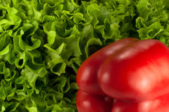 Roter grüner Pfeffer auf grünem Kopfsalat Lizenzfreie Stockfotografie