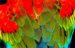 Roter grüner Wing Macaw Parrot Feathers Abstract-Hintergrund stockfoto