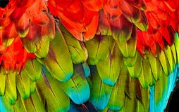 Roter grüner Wing Macaw Parrot Feathers Abstract-Hintergrund lizenzfreies stockfoto