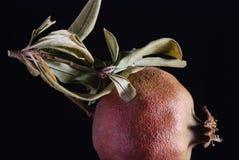 Roter Granatapfel gegen dunklen Hintergrund Lizenzfreie Stockfotos