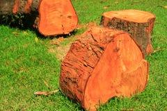 Roter hölzerner Baumschnitt lizenzfreie stockbilder